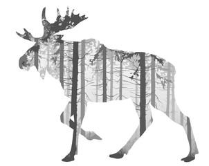 Obraz moose - fototapety do salonu
