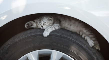 the kitten is sleeping on a car tire
