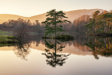 Beautiful landscape image of Tarn Hows in Lake District during beautiful Autumn Fall evening sunset with vibrant colours and still waters
