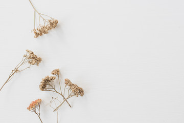 Foto auf Acrylglas Blumen Dry floral branch on white background. Flat lay, top view minimal neutral flower composition.