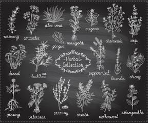 Medicine herbs collection, hand drawn doodle chalkboard illustration
