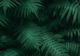 Perfect natural young fern leaves pattern background. Dark and moody feel. Top view. Copy space.