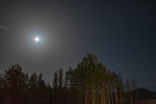 Forest in silhouette with starry night sky and light full moon