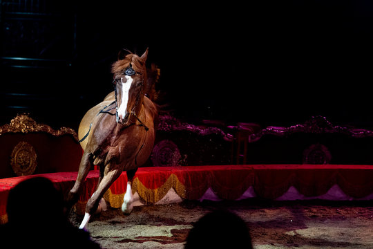 circus horses on black background