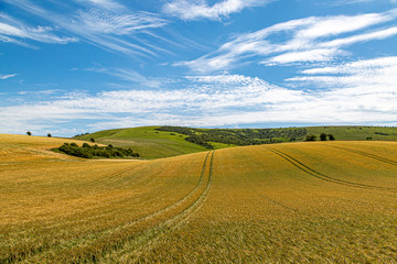 Golden wheat fields in Sussex on a sunny summers day Fototapete
