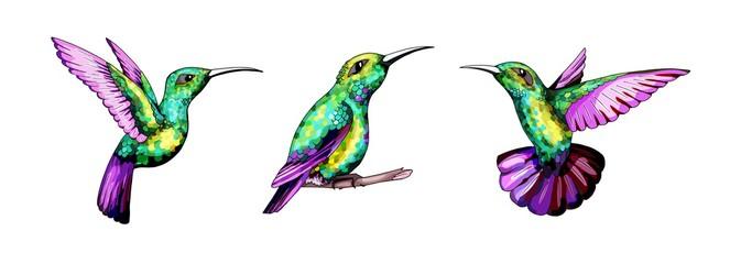 Small hummingbird set. Exotic tropical colibri bird. Golden emerald feathers