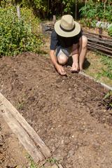 Au potager - jardinier semant des graines de haricot
