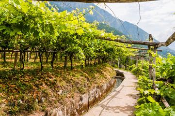 Algund, Waalweg, Weinberg, Weinpergola, Wasserversorgung, Vinschgau, Südtirol, Sommer, Italien