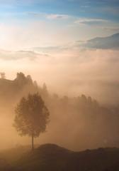 Misty morning in Carpathians. Lazeschina village, Ukraine