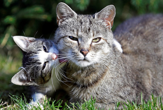 Cats are seen in the village of Krompach near the town of Cvikov