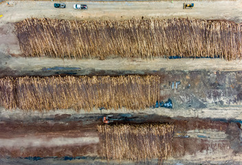 Aerial view of logs piled up at logging camp