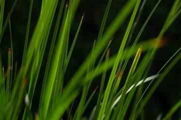 Nature green leaf stem art background