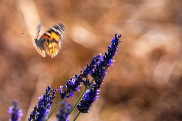 Fototapeta Motyle 15 obraz