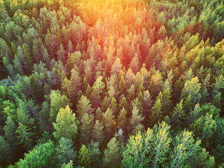 Scenic top down view of mixed forest in Finnish countryside