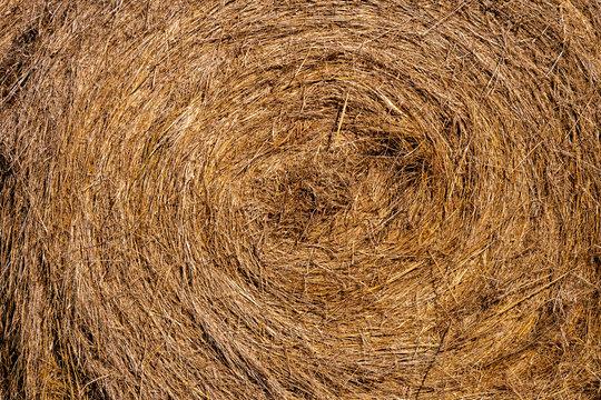Rollo de paja para alimentar el ganado El heno es hierba, legumbres u otras plantas herbáceas que han sido cortadas y secadas para ser almacenadas para su uso como forraje animal.