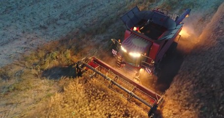 Wall Mural - Aerial view above working combine harvester in a field at sunset. Tractors and farm machines harvesting.
