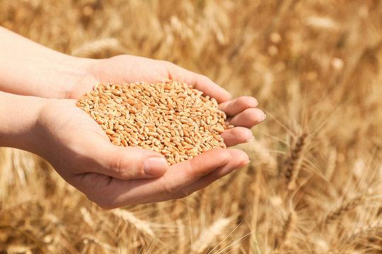 Female farmer with wheat grains in field