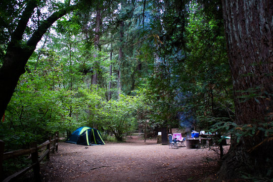 camping in redwoods in Northern California