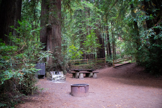 camping grounds in redwoods in Northern California