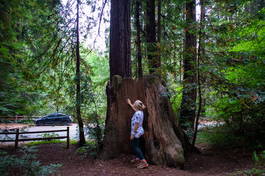 Girl in redwoods in Northern California