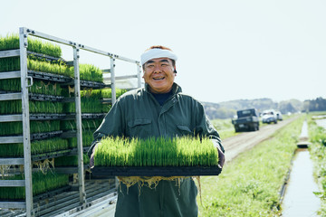 Portrait of farmer holding seedling tray of paddy