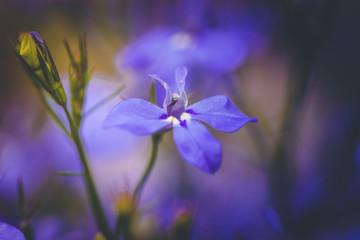 Makro Aufnahme einer Blume