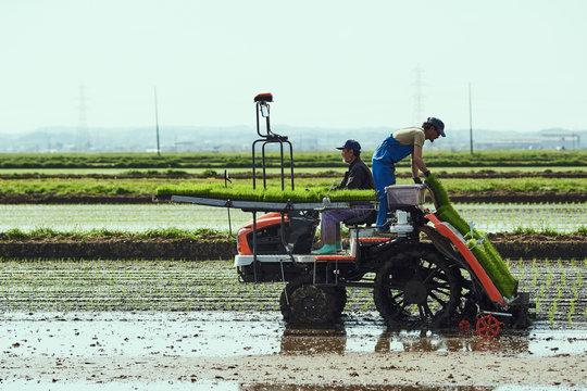 田植えをする農家の親子