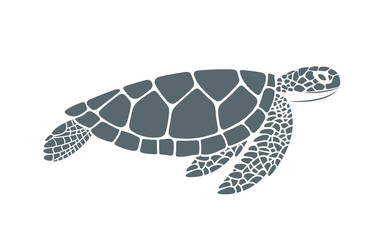 Sea turtle. Isolated turtle on white background. Reptile