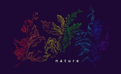 Coffee tree. Vector rainbow sketch. Nature realistic branch