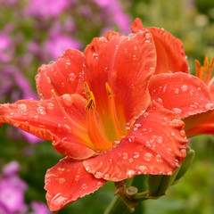 Blumen 1119