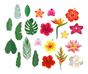 Tropical flowers and leaves, collection isolated elements. Vector illustration design template in flat style