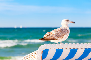 Summer Beach Detail with Seabird / Seagull on top of holiday beach chair as lookout on baltic sea (copy space)