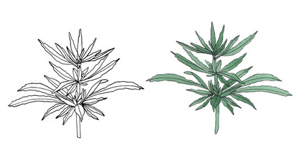 Watercolor and contour branch of Green hemp with leaves