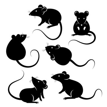 Set of rats black silhouettes