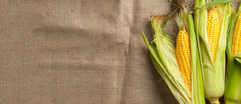 Corn with leaves on burlap