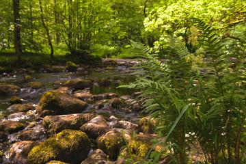Paysage rivière  Royaumes-Unis