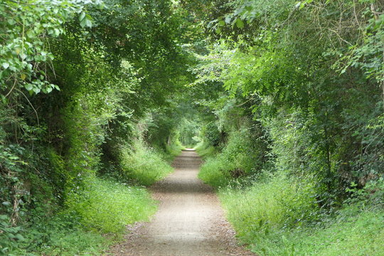 Green rings in the tunnel of trees. A path runs straight through a forest, where the light shines through with light and dark rings. Maybe it is also a time machine of nature.