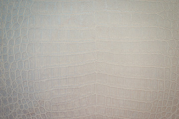 Texture of python skin close-up. Snake or crocodile skin painted in a light color.