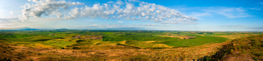 Wall Mural - Panoramic View of the Stunning Palouse Landscape of Eastern Washington. Colors seem to shift and change in the light on the rolling agricultural landscape from  Steptoe Butte State Park.