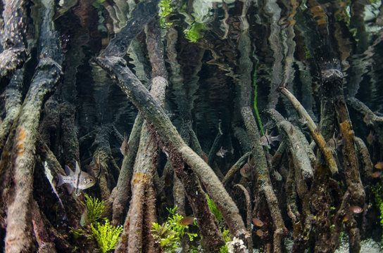 Underwater Mangroves
