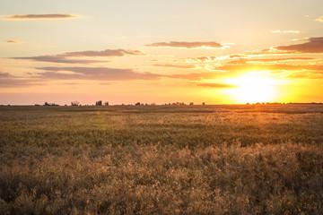 Foto auf Gartenposter Landschappen Spikelets of yellow wheat at sunset