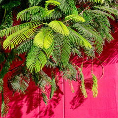 Plants on pink concept. Tropical plant