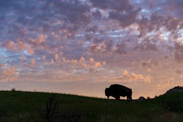 Bison Silhouette at Sunrise in Roosevelt National Park