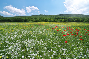 Fototapete - Spring medoaw of flowers