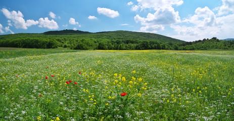 Fototapete - Spring medoaw of flowers.
