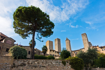 Huge pine tree in front of city walls and towers of San Gimignano, Tuscany, Italy