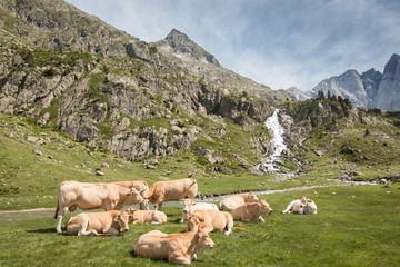 Troupeaux au pied du Vignemale, Pyrénées