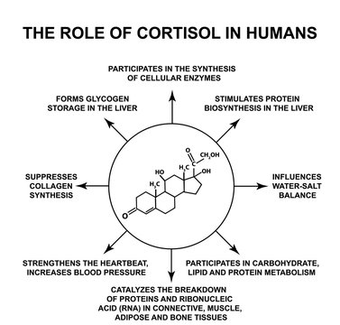 The role of cortisol in humans. The stress hormone cortisol is a chemical molecular formula. Infographics. Vector illustration on isolated background.