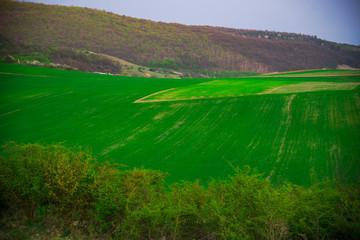 Deurstickers Groene Spring landscape
