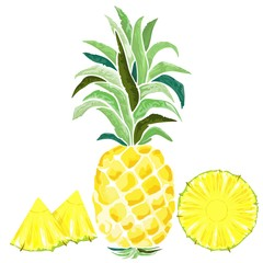 Pineapple and Slices Watercolor Style Vector illustration isolated on white